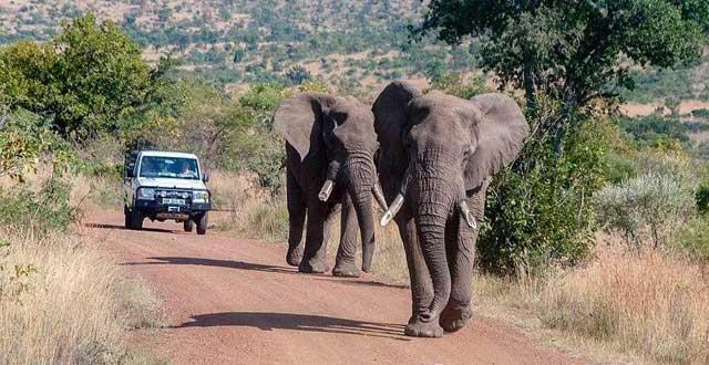 安排南非比邻斯堡野生动物园敞篷车探寻非洲,绝美南非西海岸国际公园